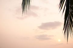 Ήλιος που λάμπει μέσω των φύλλων φοινίκων Κάτω από τα πράσινα φύλλα φοινικών με το φως του ήλιου Στοκ φωτογραφία με δικαίωμα ελεύθερης χρήσης