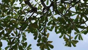 Ήλιος που τρεμοσβήνει μέσω των τροπικών δέντρων σε μια ηλιόλουστη ημέρα του Μπαλί όμορφη Ινδονησία νησιών kuta πόλη ηλιοβασιλέματ απόθεμα βίντεο
