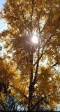 Ήλιος που φιλτράρεται μέσω κίτρινου στοκ φωτογραφίες με δικαίωμα ελεύθερης χρήσης