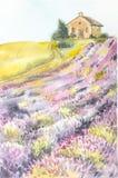 Ήλιος πρωινού πέρα από το τοπίο με έναν lavender τομέα Απεικόνιση Watercolor για τις κάρτες, εκτύπωση, που και Στοκ Εικόνα
