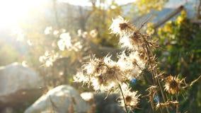 Ήλιος τομέων αραχνών εγκαταστάσεων φιλμ μικρού μήκους