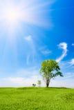ήλιος τρία δέντρα κάτω στοκ εικόνες