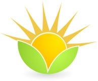 ήλιος φύλλων απεικόνιση αποθεμάτων