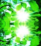 ήλιος φύλλων Στοκ φωτογραφία με δικαίωμα ελεύθερης χρήσης
