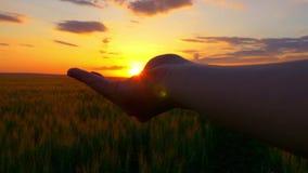 ήλιος χεριών σας Χέρι γυναικών που πιάνει τον ήλιο ενάντια σε ένα όμορφο ηλιοβασίλεμα στον ορίζοντα σε έναν σε αργή κίνηση απόθεμα βίντεο