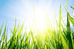 ήλιος χλόης Στοκ εικόνα με δικαίωμα ελεύθερης χρήσης