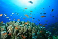 ήλιος ψαριών κοραλλιών Στοκ Φωτογραφία