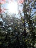 ήλιος στοκ φωτογραφία με δικαίωμα ελεύθερης χρήσης