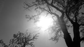 Ήλιος @ Eng πρωινού Κήπος του Luis Fonseca στοκ φωτογραφία