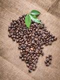 Ήπειρος Αφρική και το νησί της Μαδαγασκάρης από τα φρέσκα ψημένα σιτάρια του Robusta Arabica καφέ Στοκ Εικόνες