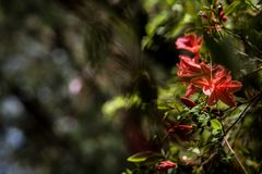 Ήπια κόκκινα λουλούδια σε ένα καλυμμένο υπόβαθρο ενός πράσινου δάσους σε ένα όμορφο bokeh στοκ εικόνες