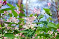 Ήπια ρόδινα λουλούδια σε έναν θάμνο στο δάσος Στοκ φωτογραφίες με δικαίωμα ελεύθερης χρήσης