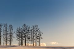 Ήπιος λόφος επτά το χειμώνα, Biei, Hokkaido, Ιαπωνία στοκ φωτογραφία με δικαίωμα ελεύθερης χρήσης