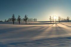 Ήπιος λόφος επτά το χειμώνα, Biei, Hokkaido, Ιαπωνία στοκ φωτογραφίες