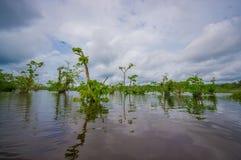 Ήρεμα και μαγικά σκοτεινά νερά του Αμαζονίου, που βρίσκονται στο τροπικό δάσος της Αμαζώνας στο εθνικό πάρκο Cuyabeno, στην επαρχ Στοκ Εικόνες