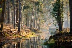 Ήρεμα νερά στο ρεύμα στο ηλιοβασίλεμα στο δάσος Στοκ φωτογραφία με δικαίωμα ελεύθερης χρήσης