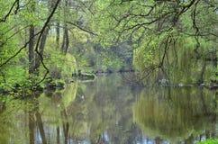 Ήρεμα ρέοντας ποταμός Nezarka, νότια Βοημία Στοκ Εικόνες