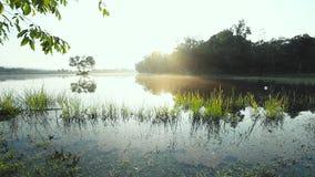 Ήρεμη άποψη λιμνών στην ανατολή Ομίχλη πέρα από το νερό το πρωί απόθεμα βίντεο