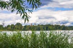 Ήρεμη αρμονία της θερινής φύσης Παρόχθιος κάλαμος στο Seliger lakeshore κάτω από το νεφελώδη ουρανό, περιοχή Tver Στοκ εικόνα με δικαίωμα ελεύθερης χρήσης