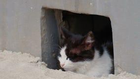 Ήρεμη γάτα που κοιτάζει από την τρύπα υπογείων στην οδό απόθεμα βίντεο