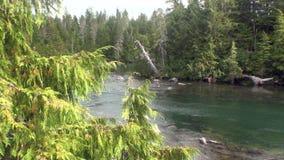 Ήρεμη ηρεμία ποταμών βουνών στα καταπληκτικά τοπία Αλάσκα υποβάθρου φιλμ μικρού μήκους