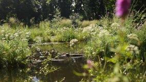 Ήρεμη λίμνη με το πολύβλαστο πράσινο δασόβιο πάρκο στην ηλιοφάνεια απόθεμα βίντεο