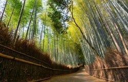 Ήρεμη πορεία στο άλσος μπαμπού Arashiyama στο Κιότο, Ιαπωνία Στοκ Εικόνα