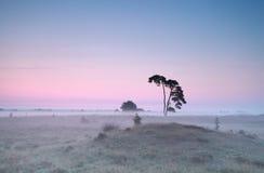 Ήρεμη misty ανατολή πέρα από το λιβάδι με το πεύκο Στοκ Εικόνα