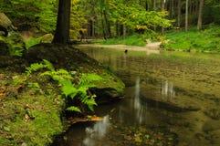 Ήρεμος δασικός ποταμός φθινοπώρου Στοκ εικόνα με δικαίωμα ελεύθερης χρήσης