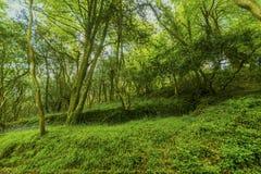 Ήρεμος δευτερεύων δρόμος στο δάσος στοκ φωτογραφίες
