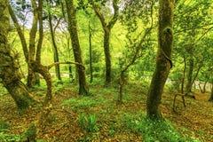 Ήρεμος δευτερεύων δρόμος στο δάσος στοκ φωτογραφία με δικαίωμα ελεύθερης χρήσης