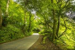 Ήρεμος δευτερεύων δρόμος στο δάσος στοκ εικόνα με δικαίωμα ελεύθερης χρήσης