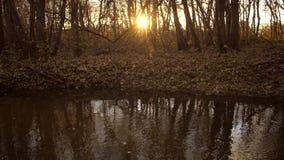 Ήρεμος κολπίσκος στο δάσος φθινοπώρου στις ακτίνες του ηλιοβασιλέματος απόθεμα βίντεο
