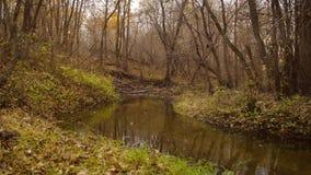 Ήρεμος κολπίσκος στο δάσος φθινοπώρου απόθεμα βίντεο