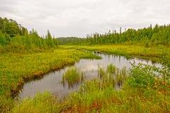 Ήρεμος κολπίσκος σε έναν υγρότοπο βόρειων ξύλων στοκ εικόνες με δικαίωμα ελεύθερης χρήσης