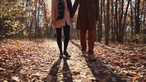 Ήρεμος περίπατος σε ένα δάσος το φθινόπωρο απόθεμα βίντεο