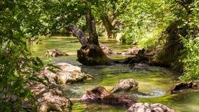 Ήρεμος ποταμός που ρέει στο ηλιόλουστο πράσινο δάσος απόθεμα βίντεο