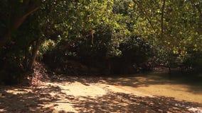 Ήρεμος σκιερός κολπίσκος που περιβάλλεται από τα δέντρα απόθεμα βίντεο