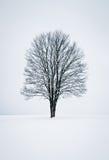 ήρεμος χειμώνας σκηνής Στοκ Εικόνες