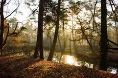 Ήρεμο δάσος με το φως του ήλιου που έρχεται μέσω των δέντρων Στοκ Φωτογραφία