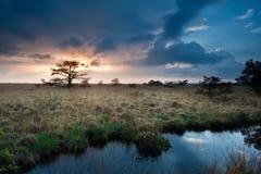 Ήρεμο ηλιοβασίλεμα πέρα από τα έλη με τα δέντρα λίγων πεύκων Στοκ Εικόνα