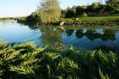Ήρεμο νερό ενός μικρού ποταμού Στοκ Εικόνα