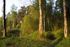 Ήρεμο πρωί Στοκ φωτογραφίες με δικαίωμα ελεύθερης χρήσης