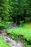 Ήρεμο ρεύμα στη μέση ενός δάσους στοκ εικόνες