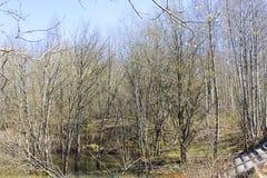 ήρθε άνοιξη Δάσος την άνοιξη στοκ φωτογραφίες