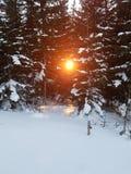 ήρθε ηλιοβασίλεμα ομίχλης επάνω στο χειμώνα Στοκ φωτογραφία με δικαίωμα ελεύθερης χρήσης