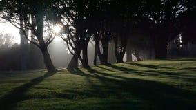 Ήλιος δέντρων Στοκ Φωτογραφίες