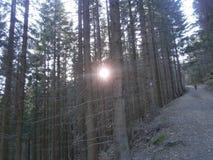 Ήλιος για τα δέντρα στοκ εικόνες με δικαίωμα ελεύθερης χρήσης