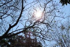 Ήλιος και σκοτεινό δέντρο Στοκ φωτογραφία με δικαίωμα ελεύθερης χρήσης