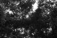Ήλιος και σκοτεινό δέντρο Στοκ εικόνα με δικαίωμα ελεύθερης χρήσης